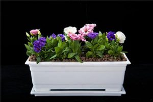 انواع گلدان پلاستیکی تزئینی